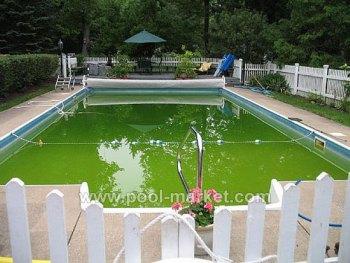 Быть может зеленая вода в бассейне красиво смотрится на картинках, но, поверье мне, купаться в такой воде нет никакого удовольствия